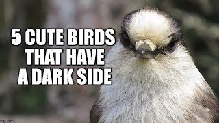 5 Cute Birds That Have a Dark Side – Halloween Special