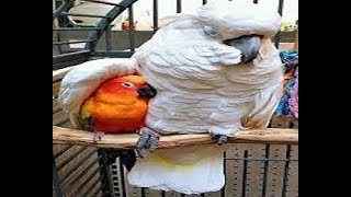 cute parrots funny video compilation..latest laughing  2019.funny birds video. entertainment video