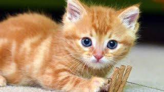 Kittens Meowing – Cute Cats Meowing – Kitten Meowing Video – Cat Meowing Videos
