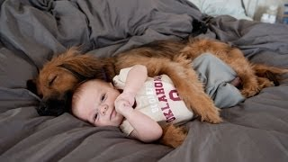 Dog Hugging & Cuddling With Cute Baby