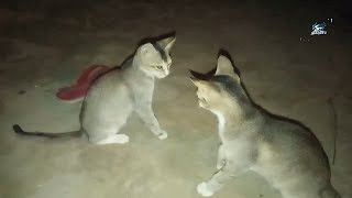 Funny cats time in village.