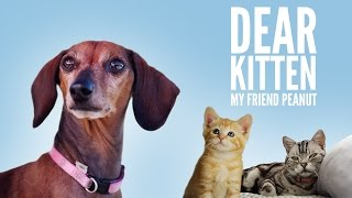 Dear Kitten: My Friend Peanut