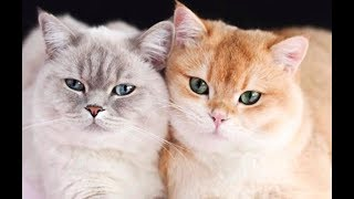 WOW – Cats and Kittens Galore. Enjoy Funny Cute Cats and Kittens Meowing Playing Videos #31