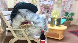 Happy hamster enjoys pampered life – Cute and funny videos of hamsters