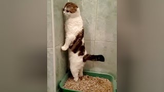 SUPER WEIRD CATS that will totally CONFUSE YOU! – Extremely FUNNY CAT VIDEOS compilation