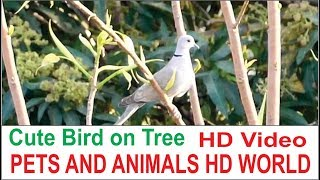 Cute Bird At Green Tree HD VIDEO# 0011