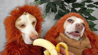 Disguise Wizardry 101: Cute Dogs Maymo & Penny