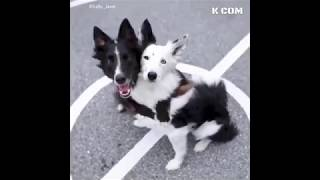Cute Dogs and Cats –  Funniest Animals Videos 2019 [ KCOM ]