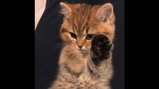 More Funny Cats Compilation 2018