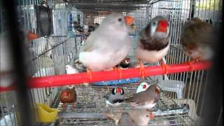 CUTE SMALL BIRDS WITH WONDERFUL COLORS – CUTE BIRDS