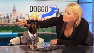Ep 9: ANCHORDOG – Funny News Dog Video