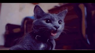 Best of Cats in 2 Minutes – Funny cats compilation