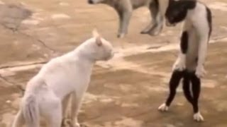 1 hour of funny and cute cats ♥♥♥