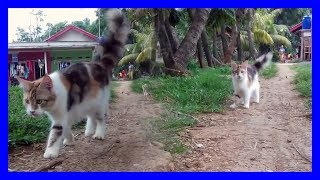 Cute Cats walk in The Garden – Angora Cat