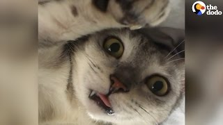 Funny Cats Who Are 'Broken' | The Dodo