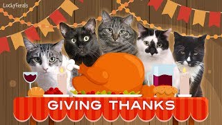 Giving Thanks For Our Many Friends! Happy Thanksgiving 2018! Cute Cats Compilation!