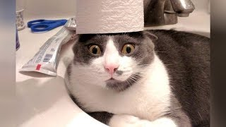 CRAZY CATS vs PAPER, get ready for SUPER LAUGHING! – Funny CAT VIDEOS