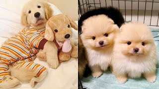 Cute Puppies Ever Video Compilation – Cute Dogs
