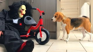 Dogs Vs Jigsaw Prank : Funny Dogs Louie and Marie