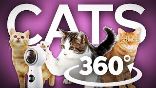 Vr 360 cute cats  – 360 vr cats – 360 vr kittens – 360 vr video kittens