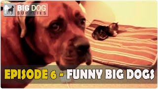 Funny and Cute Big Dogs Video – Episode 6