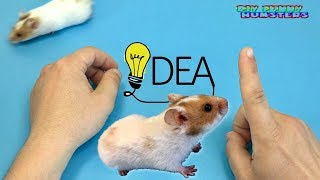 DIY funny hamster maze videos | Simka Hamster videos for children