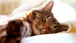 Cute Cats and Kittens Sleeping #4