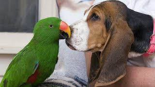 Funny Birds and Dogs Playing Together Compilation (2018)
