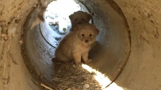 Scared Puppies Rescued from a Pipe
