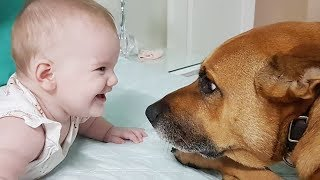 Cute Dogs Tease Babies – Funny Dog Videos