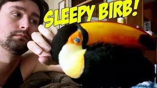 Petting a Sleeping Toucan! (CUTE!!)