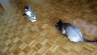 Funny cats on catnip, high and happy! Part 1