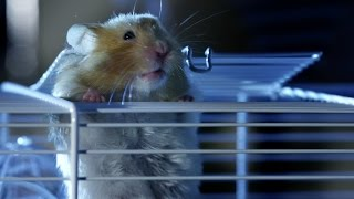 Hamster's great escape | Pets – Wild at Heart: Episode 2 preview | BBC One