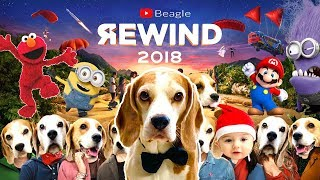 Funny Dogs REWIND 2018 Compilation : Funny Dogs Louie and Marie