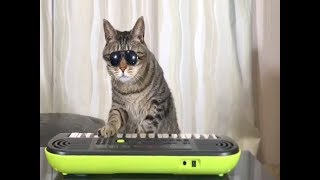 Funny Animals vines 2- funny animal compilation- funny and cute cats