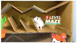 Cute Hamster Obstacle Course 👿 Hamster Maze – 2019