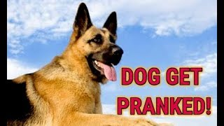 Dog Prank | Dogs Get Pranked by Owners! Funny Dogs Compilation