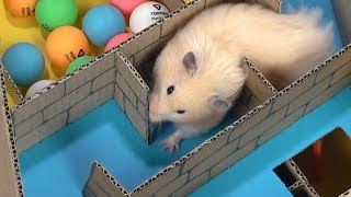 My Funny Pet Hamster in 6-Level Pyramid Maze