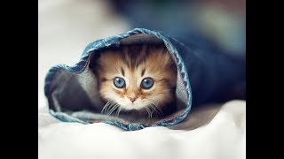 CUTE CATS AND DOGS VIDEOS 2019 | 🐱🐕Cute Kittens and Puppies Videos