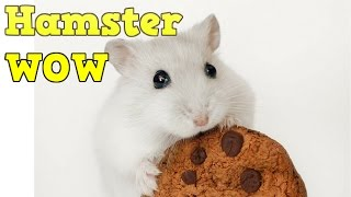 Hamster | Hamster cage | Diy hamster house | Funny hamsters | Pet Animals #1