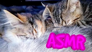 PURRING KITTENS ASMR | NURSING SOUNDS | SUCKLING SOUNDS | #CUTECATS