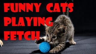 Funny cat video – Cats playing fetch Compilation 2016