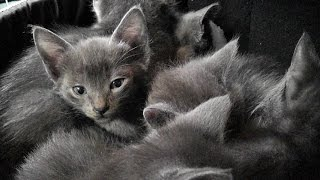 A Den Of Purring Kittens