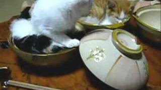 "So cute cats video ""Nekonabe"""