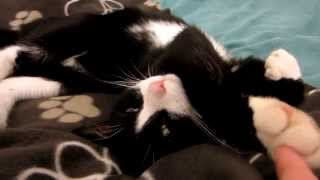 2015 Epic Cute Cats Doing Stretches Compilation !!