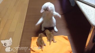 Cute Cats funny Dancing and baby cat lovely