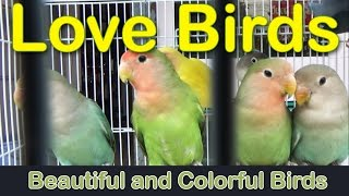 Beautiful N Colorful Love Birds | Rajahmundry Aquarium Shops | Cute Hares