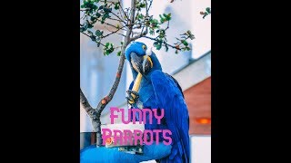 Latest Funny Animals|Cute Funny Birds|Funny Parrots