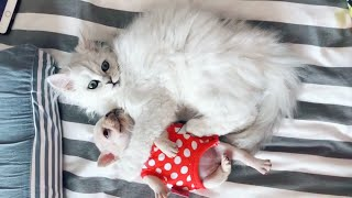 ♥Cute Cats and ♥Cute Dogs Doing Funny Things 2018♥ #1 – CuteBabe