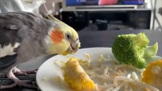 Latest Funny Parrots|Cute Funny Birds